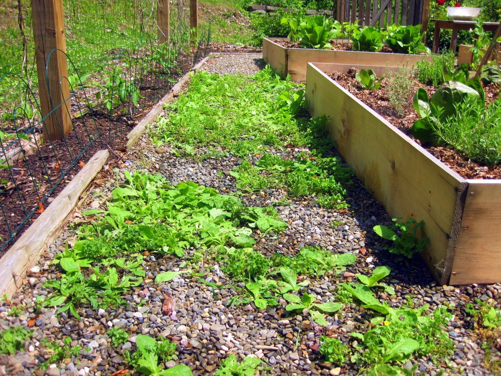Weedy Herb Garden Pre Vinegar Brothers Of Charity England